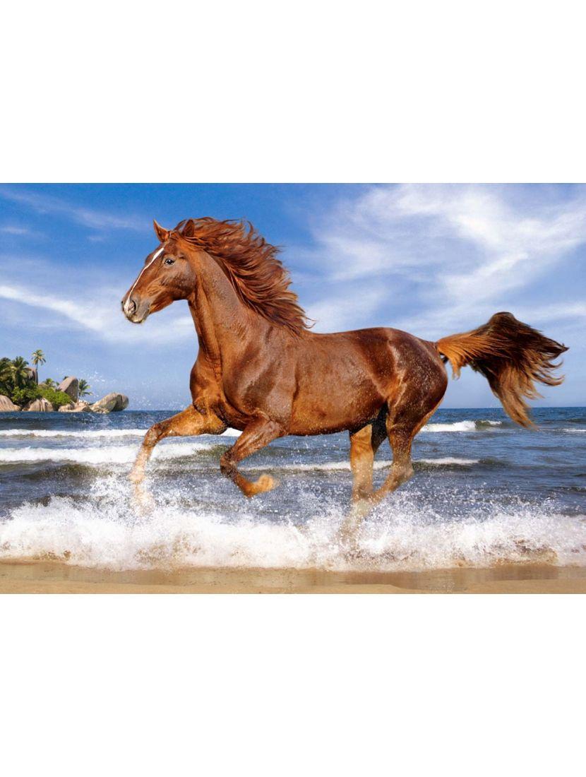 Пазл «Лошадь на пляже» 500 элементов
