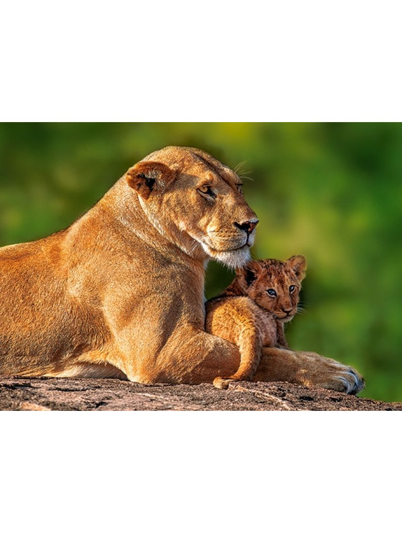 Пазл   «Львица со львенком» 180 элементов