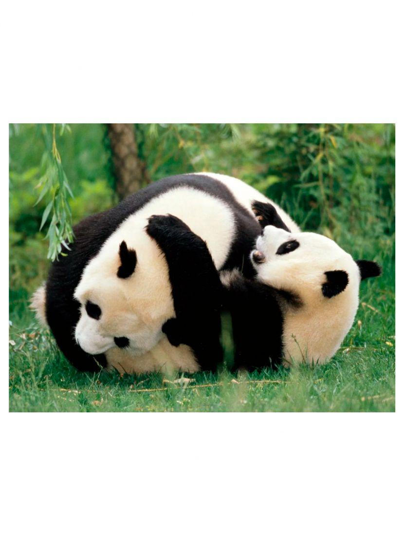 """Алмазная мозаика на подрамнике """"Весёлые панды"""""""