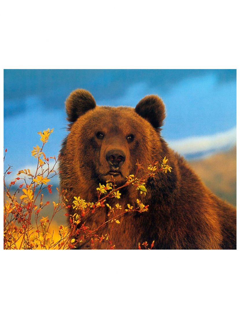 "Алмазная мозаика на подрамнике ""Хмурый медведь"""