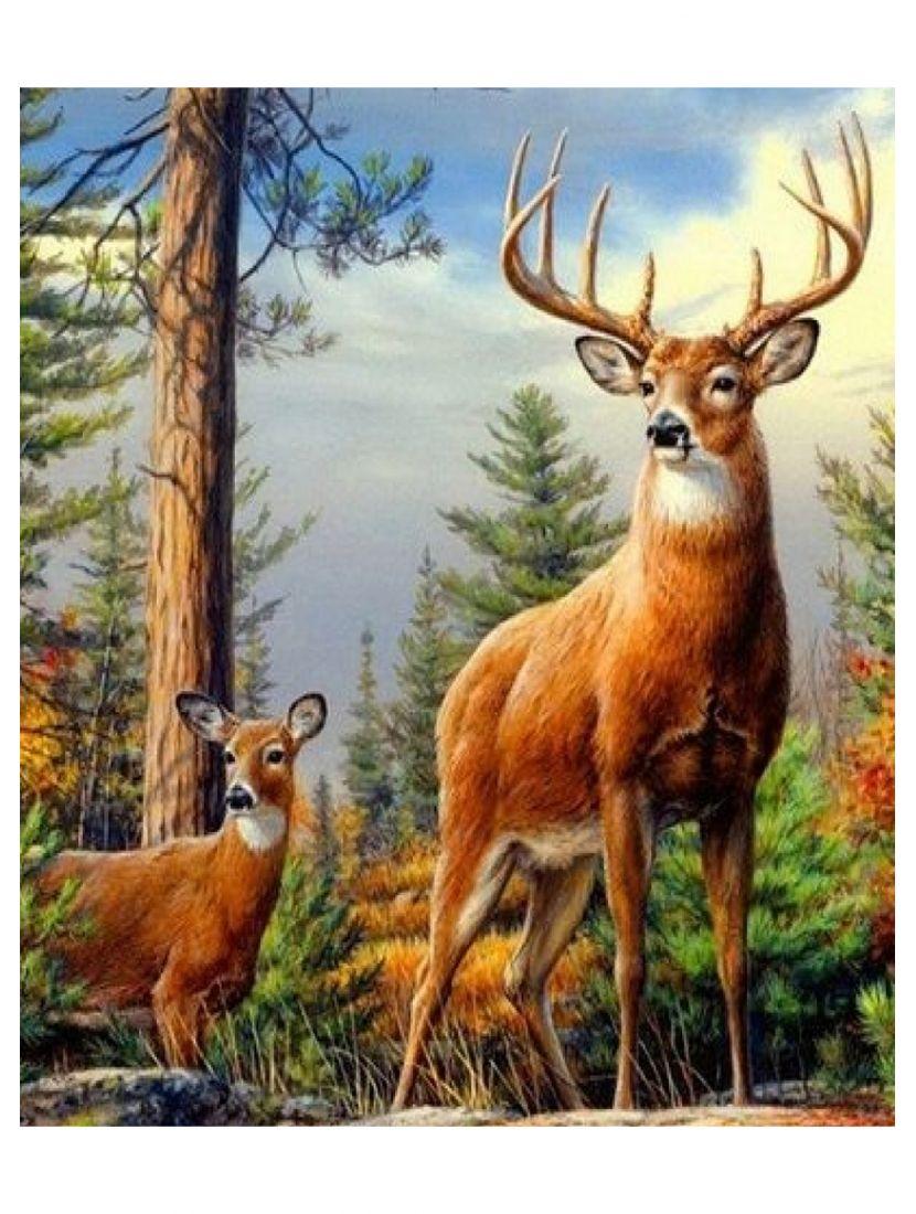 Картина по номерам «Лесные жители»