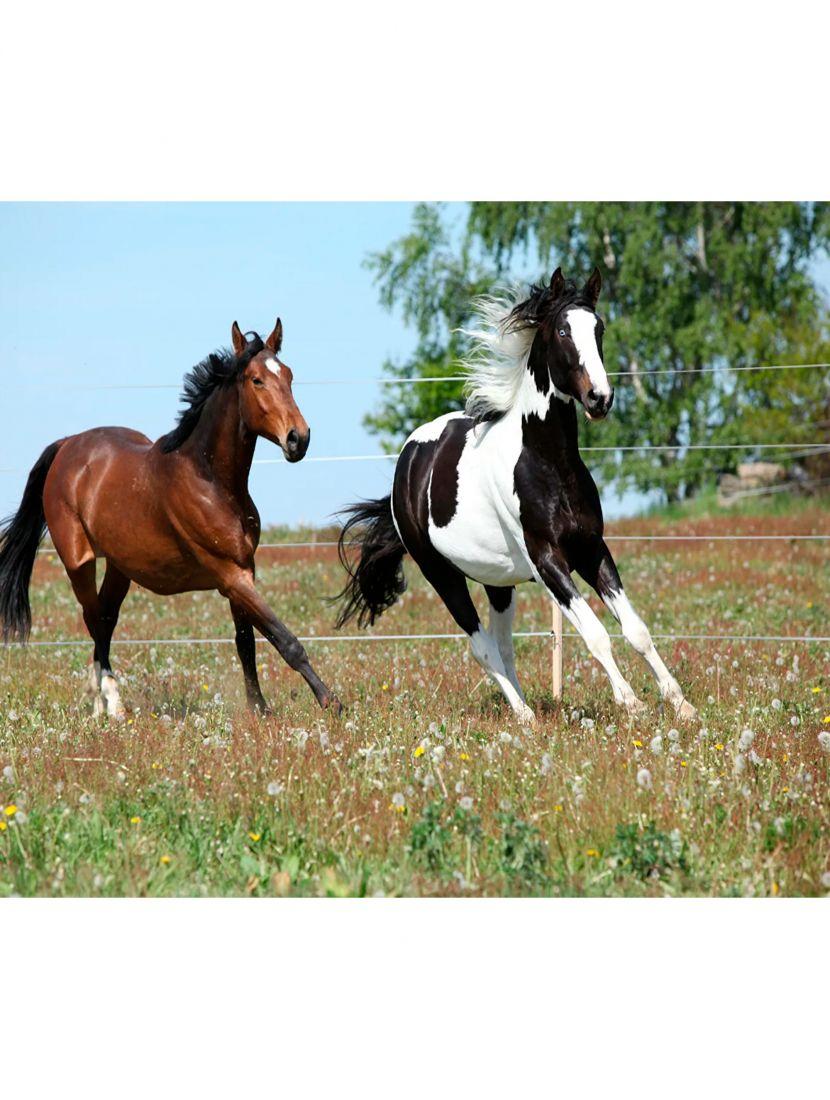 """Картина по номерам  на подрамнике """"Домашние лошади"""""""