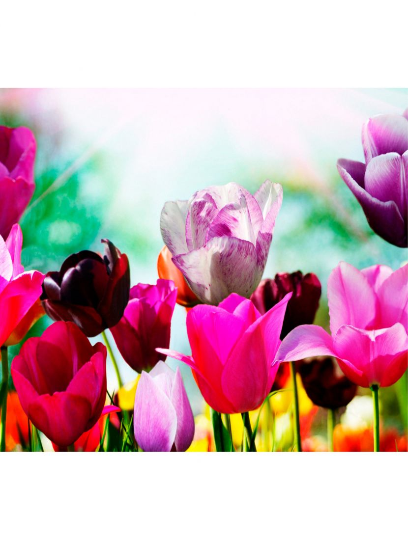 """Алмазная мозаика на подрамнике """"Весенние цветы"""""""