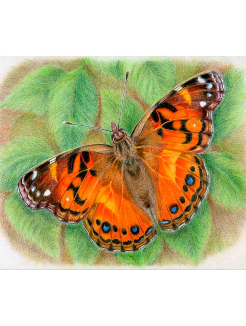 Картина по номерам «Бабочка»