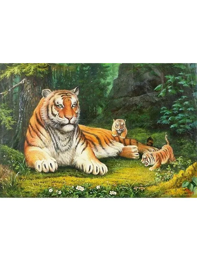 Картина по номерам  на подрамнике «Уссурийский тигр»