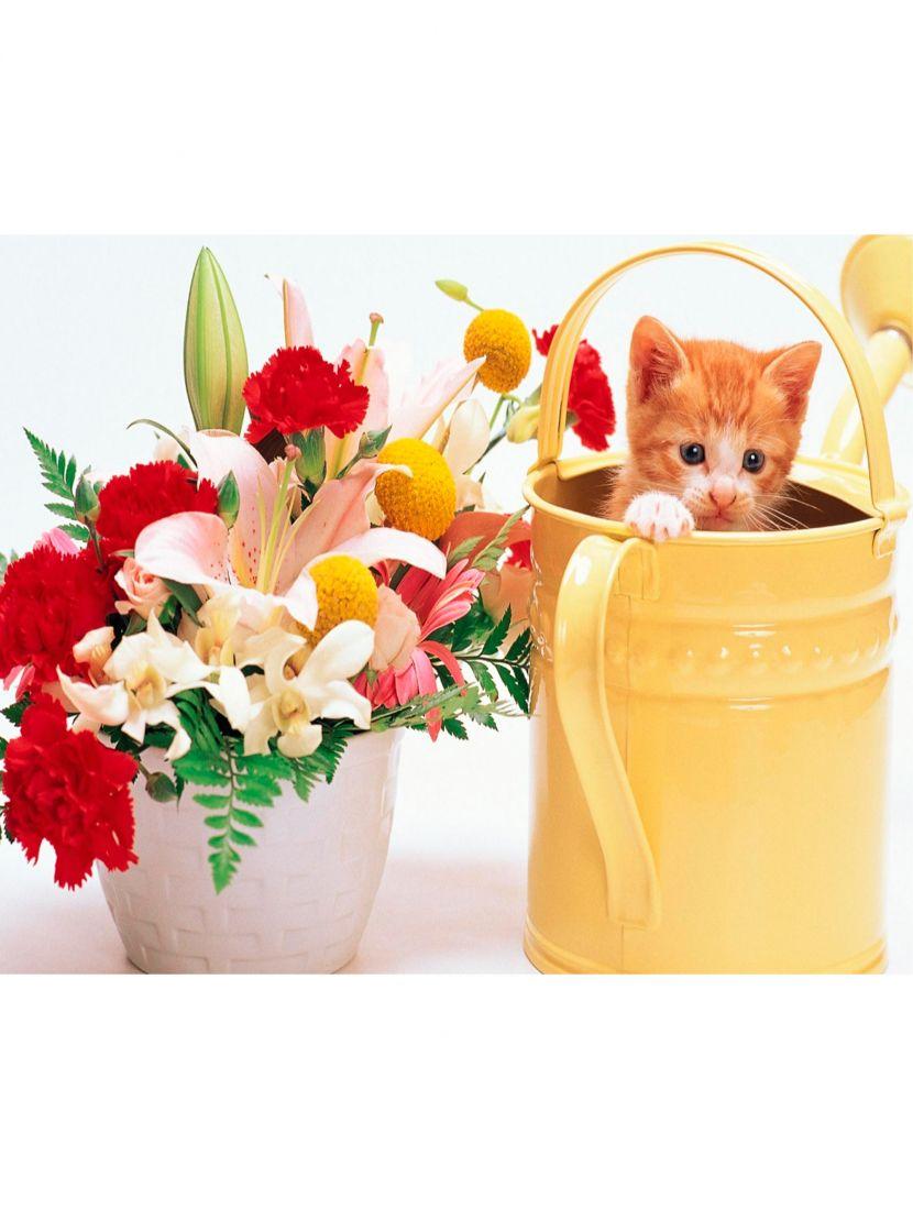 Картина по номерам  на подрамнике «Котёнок с букетом»