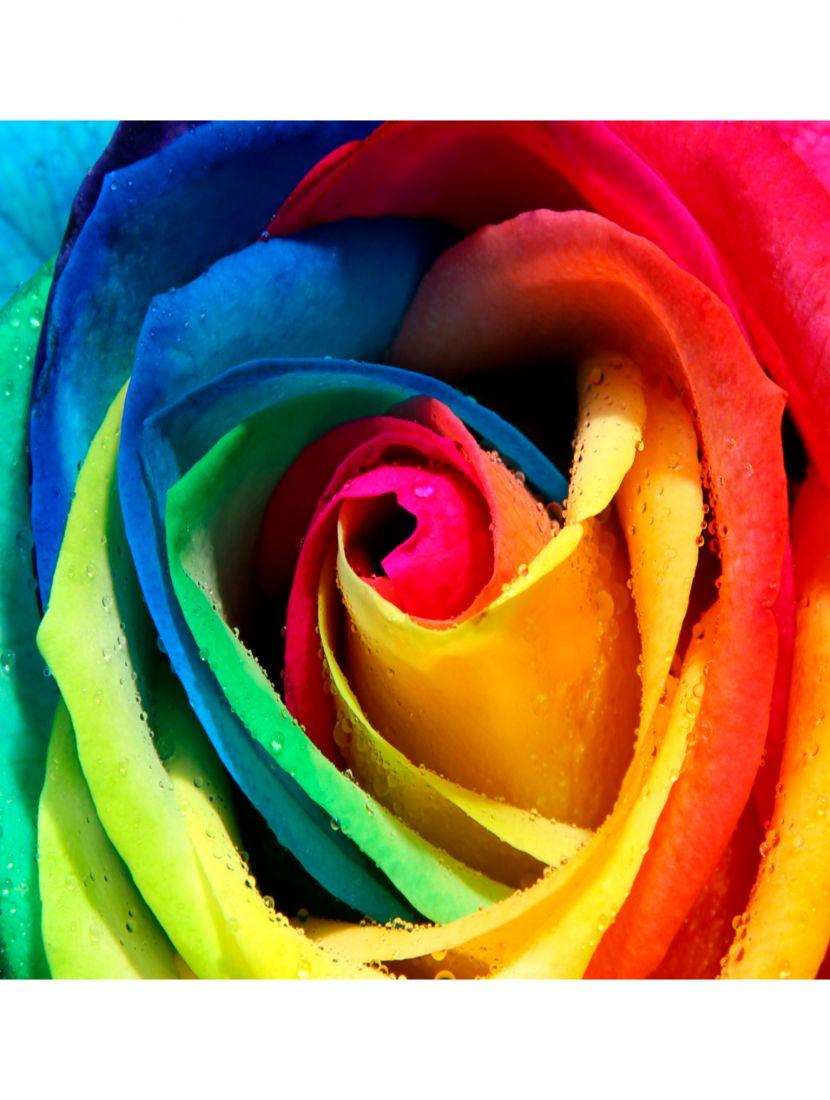 Картина по номерам  на подрамнике «Радужная роза»