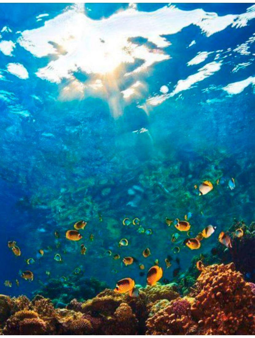 Картина по номерам  на подрамнике «Подводный мир»