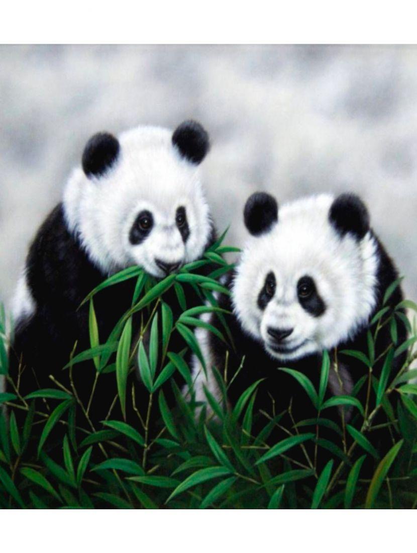 Картина по номерам  на подрамнике «Панды»