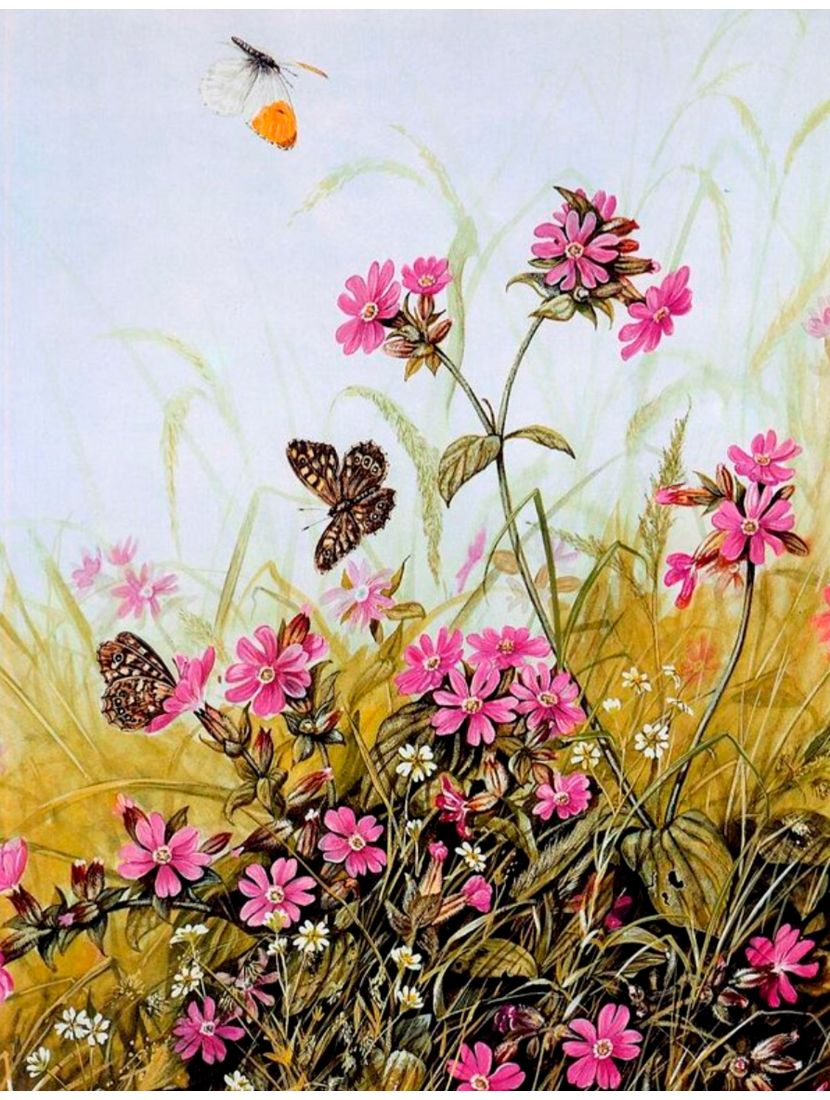 Картина по номерам  на подрамнике «Летние цветы»