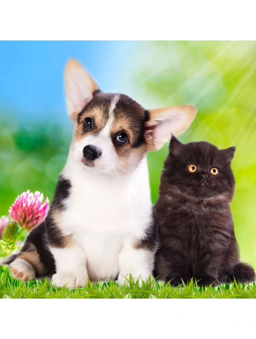 Алмазная мозаика «Котёнок и щенок»
