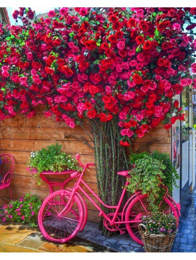 Картина по номерам  на подрамнике «Стена цветов»
