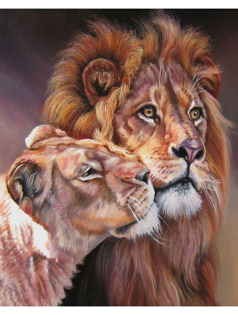 Картина по номерам  на подрамнике «Львиная пара»
