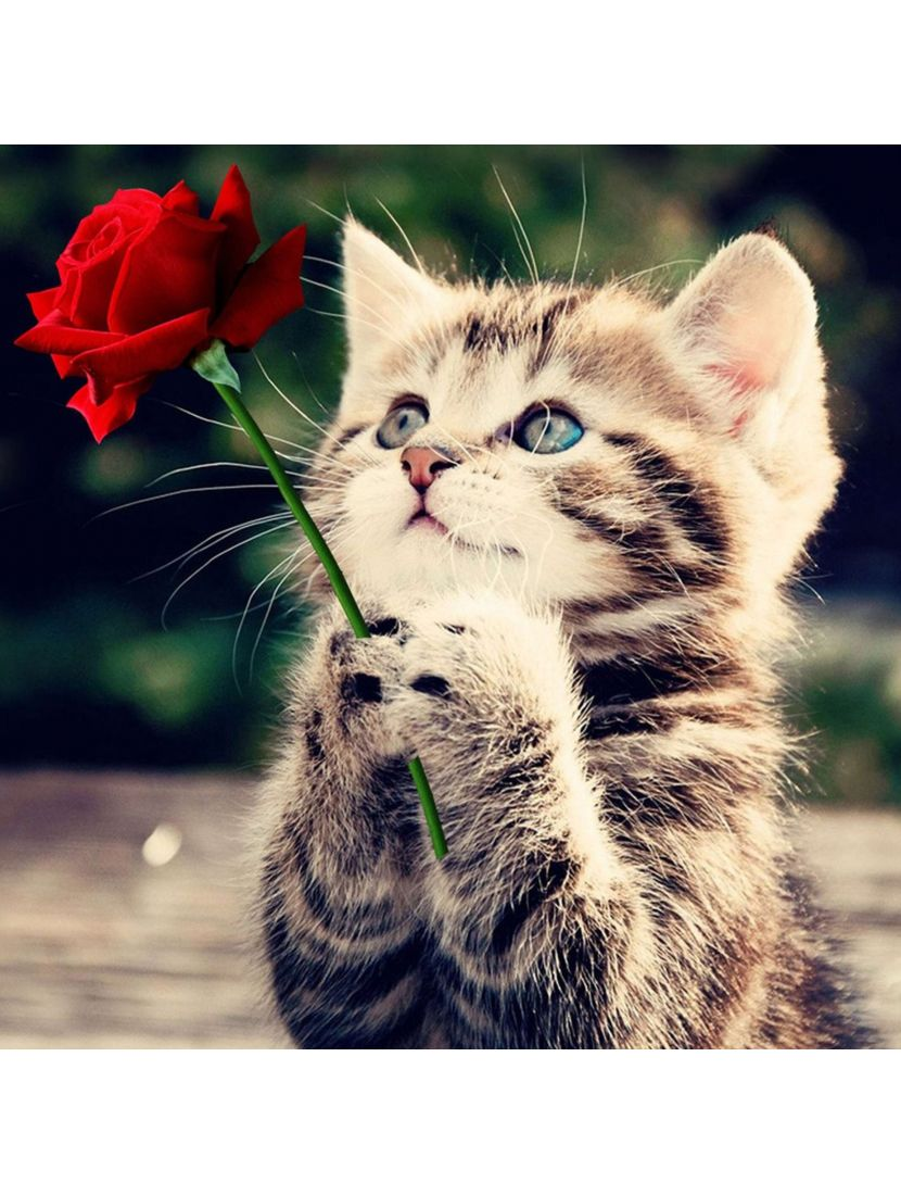 Картина по номерам  на подрамнике «Розочку подарила»