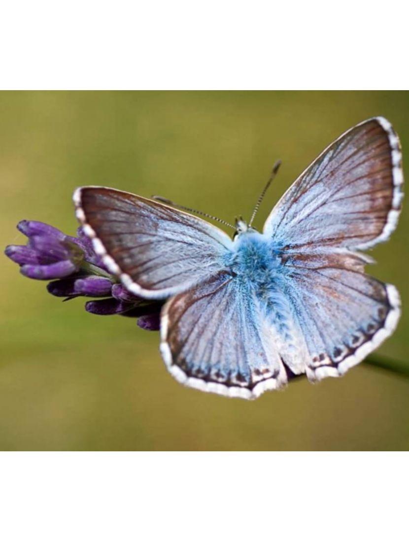 Алмазная мозаика на подрамнике «Голубянка»