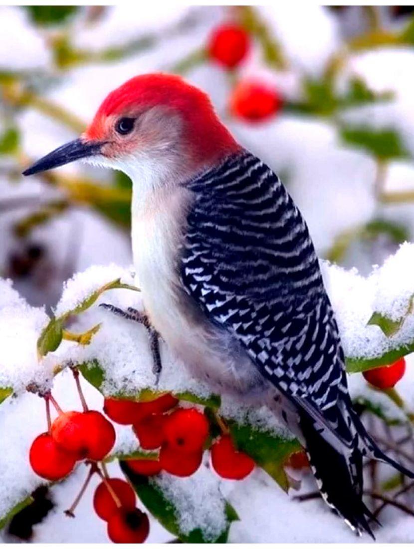 Алмазная мозаика и рисование по номерам «Зимняя птица» 2в1