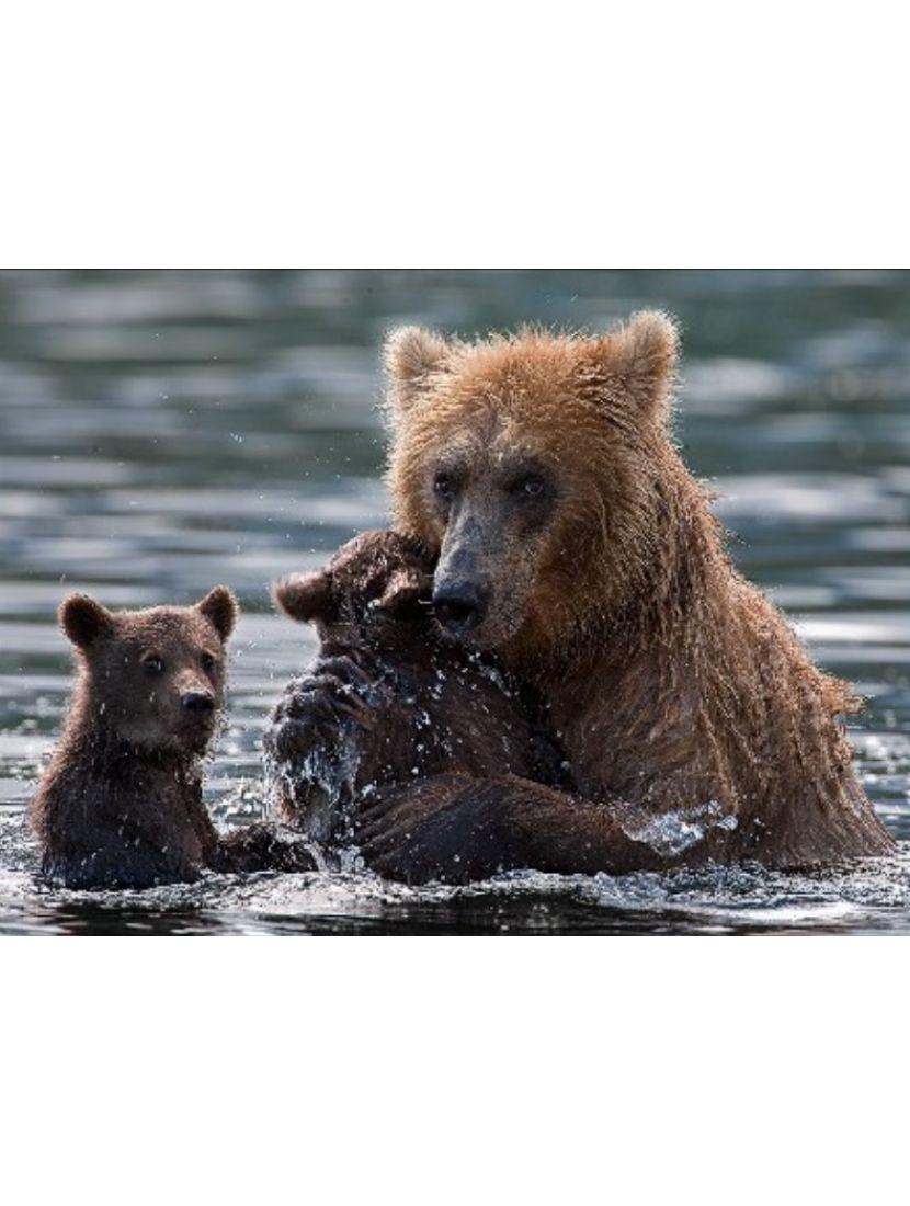 Алмазная мозаика и рисование по номерам «Медвежье купание» 2в1