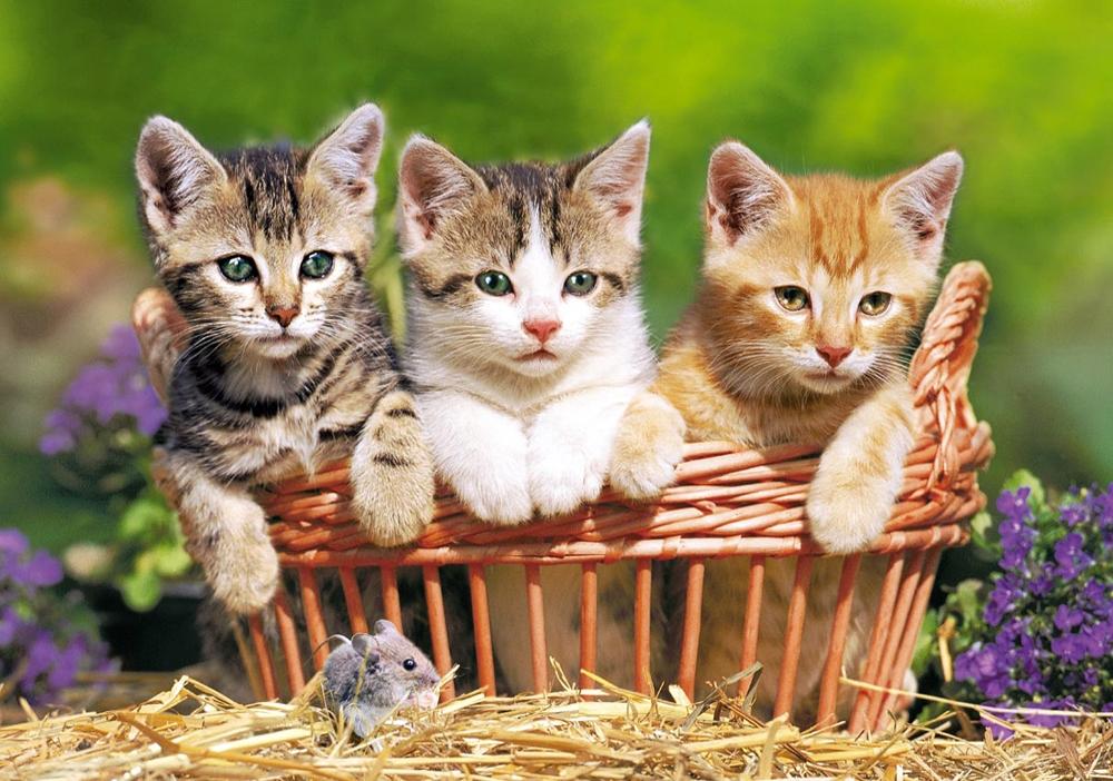 тратят фотографии котят в очень высоком разрешении этот день