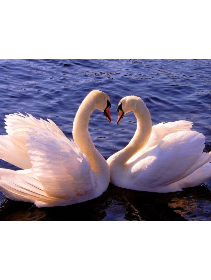 Алмазная мозаика «Лебединая любовь»