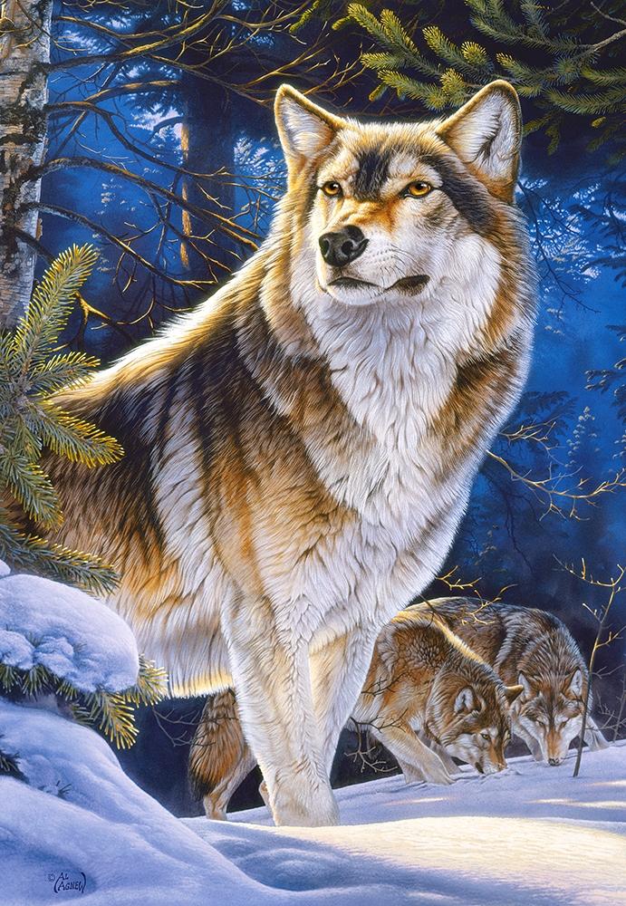 картинки на телефон дикие волки восхищаются